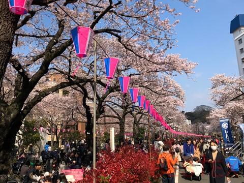 桜の名所「播磨坂」